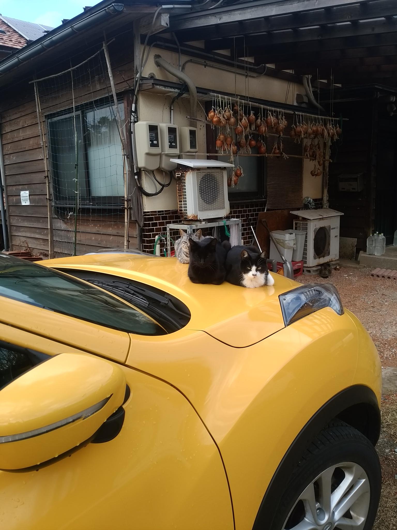 クルマの上に猫