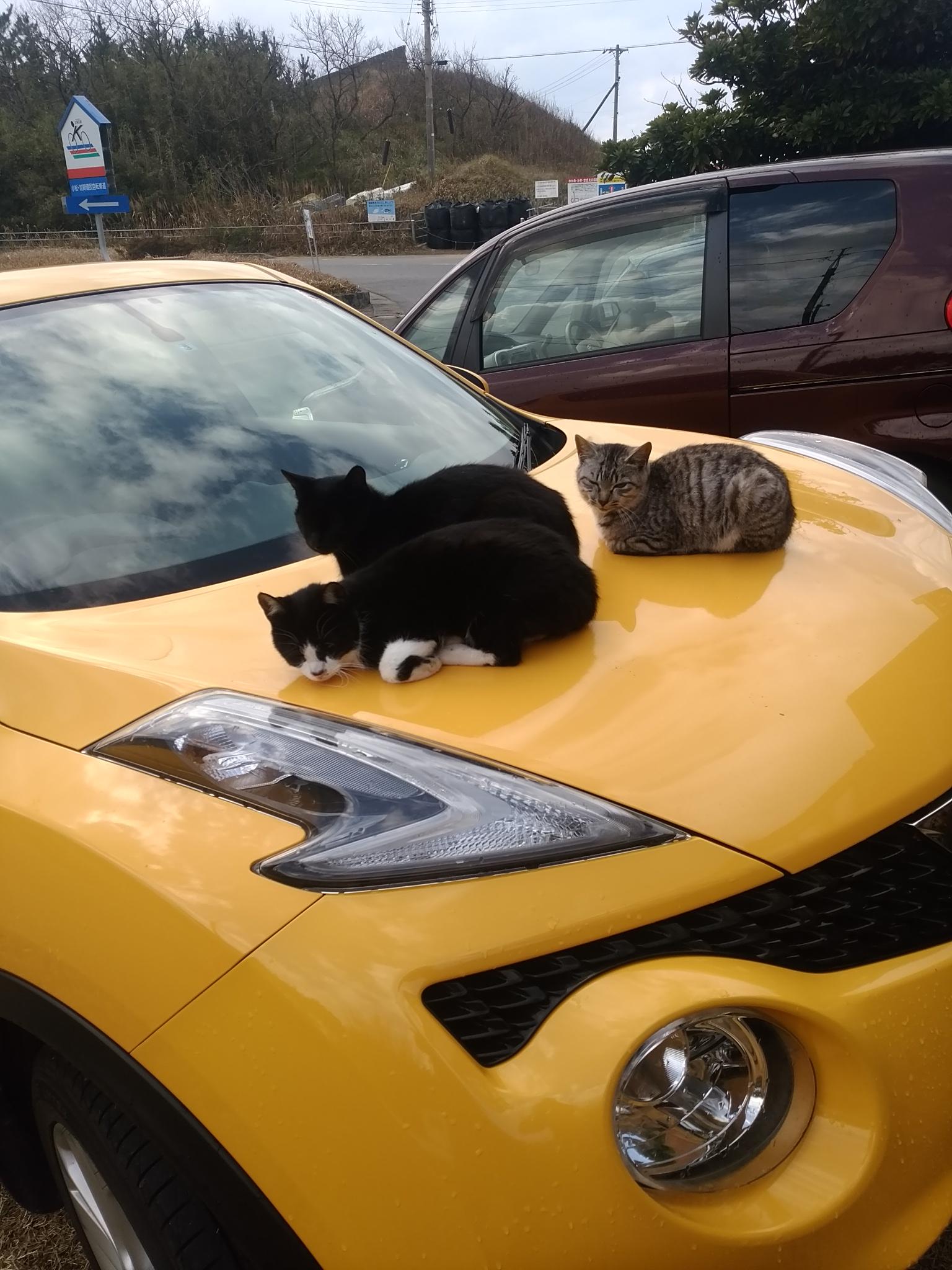 ボンネットで暖をとる猫達