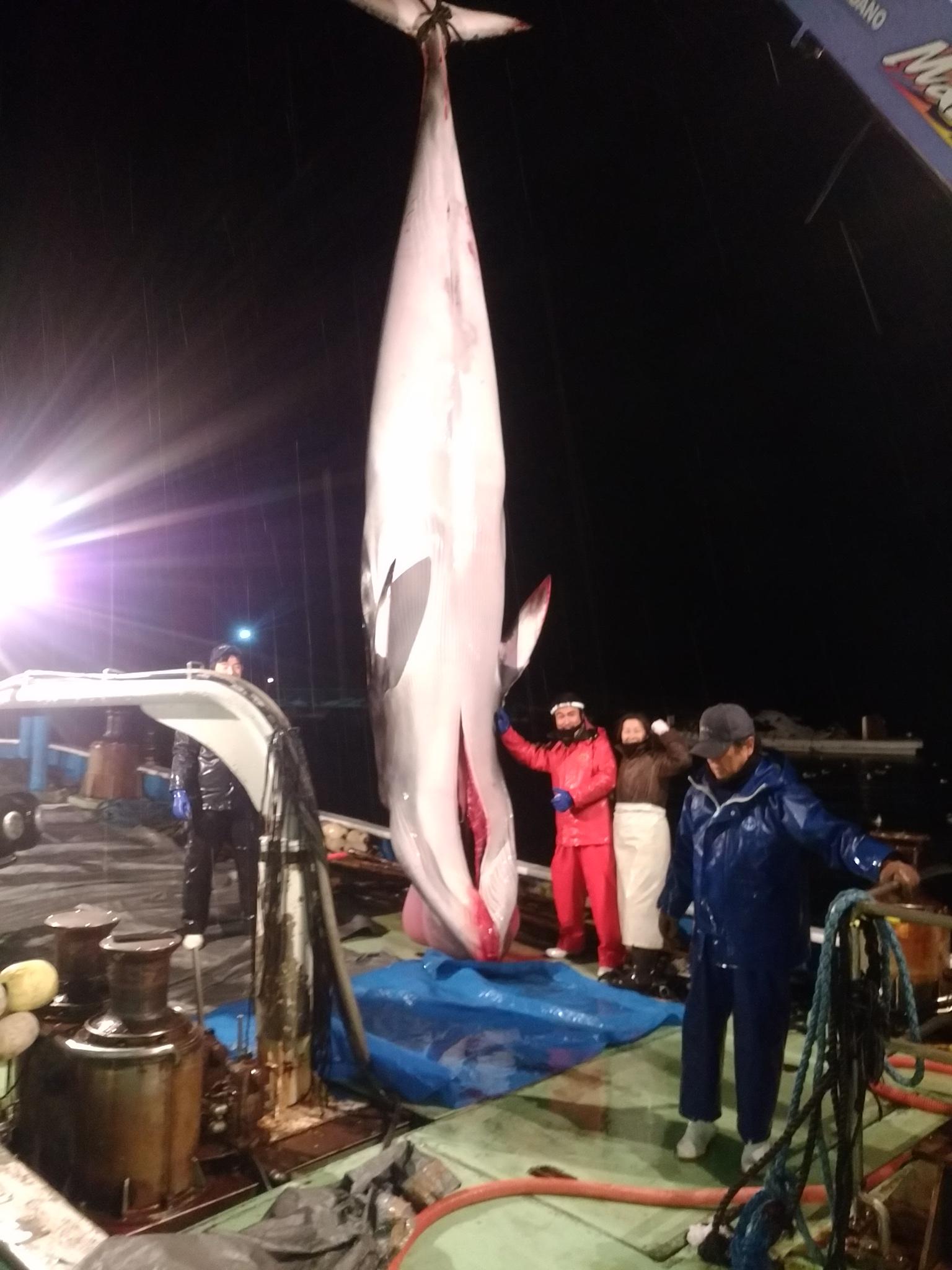能登島にあがった鯨